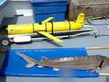 Подводный робот отыскивает находящихся под угрозой исчезновения осетровых