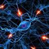 Ученые доказали, что мозг перенастраивает себя для компенсации повреждений