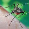 Ученые определили кого любят кусать комары