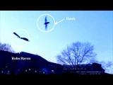Ученые создали реалистичную птицу-робота