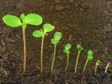 Ученые: семена используют генные сети для роста