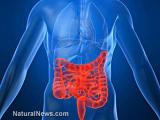 Дополнительные исследования доказывают, что кишечные бактерии контролируют работу вашего мозга