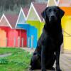 Ученые выяснили, что собаки видят мир в цвете