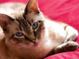 Ученые открыли лекарство для борьбы с аллергией на котов