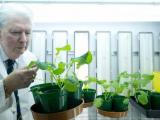 Технология азотфиксации способна значительно уменьшить использование удобрений