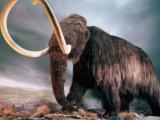 Палеонтологи Италии обнаружили скелет мамонта