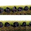 Робот «Перекати-поле» займётся мониторингом пустынь