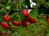 Ученые: некоторые растения могут обладать разумом