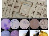 В Стэнфордском университете разработали дешевый бумажный микроскоп