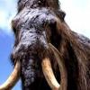 Биологи пытаются возродить мамонтов путем клонирования