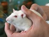 Ученые: стресс влияет на дальнейшее потомство