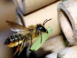 Городские пчелы используют полиуретановый герметик