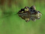 Ученые: Рептилии плачут не зря