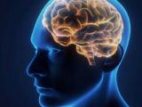 Калифорнийские ученые научились управлять памятью