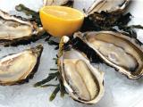 Ученые изучили норовирус, который живёт в морепродуктах