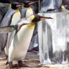 Ученые: В Антарктиде обнаружены останки гигантского двухметрового пингвина