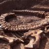 Группа ученых обнаружила крупнейшее кладбище динозавров в Мексике