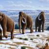 Вымирание мамонтов произошло не из-за охотников.