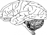 Новый искусственный мозг в электронном виде.