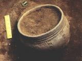 В Гарварде начали изучение археологических раскопок ДВФУ.