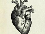 Ученые открыли секрет омоложения сердца.