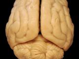 Работа мозга над воспоминаниями.