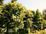 О свежем запахе в лесу