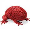 Мозг человека – отличный навигатор