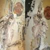 Древних белку и крота нашли в Китае