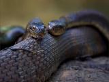 Древнейшие змеи