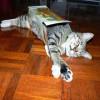 Коробки и кошки