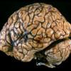 Идеальный мозг