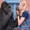 Приматы умеют говорить