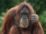 Приматы в опасности