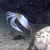Наклейки из кальмаров