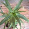 Домашние растения-вредители