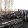 Лесные массивы подвержены опасности