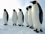 Пингвины заплатили за еду полетом