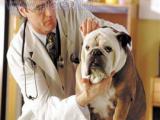 Животные-диагносты