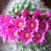 Размножение кактусов
