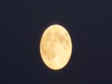 Россия основательно возьмется за освоение Луны