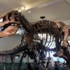 Посетите Пекинский Музей Естественной Истории в Китае