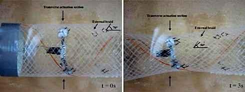 Ученые изучают биороботов способных менять форму