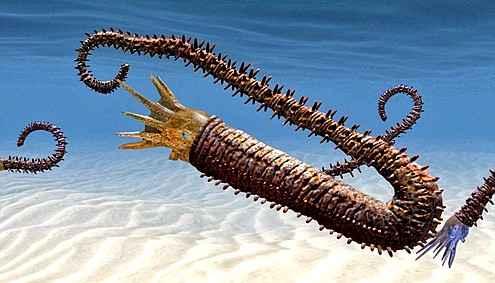 Ученые нашли древнего предка осьминогов и кальмаров