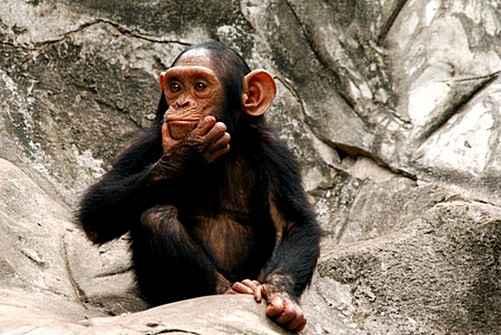 Оптогенетика способна улучшить мышление обезьян