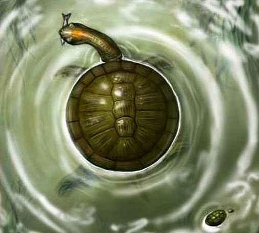 Палеонтологи обнаружили новый вид черепах