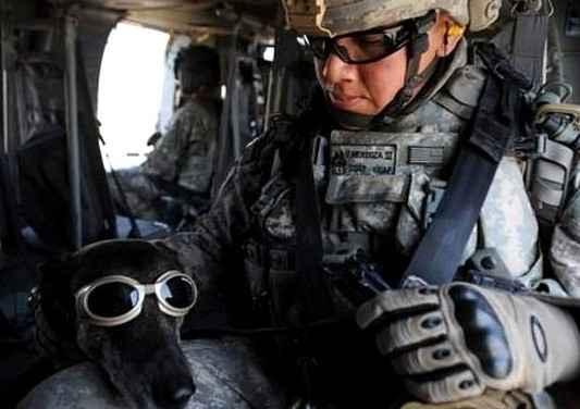 В США запущена секретная военная программа - из собак сделают суперсолдат