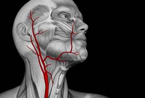 На пороге менопаузы артерии могут меняться