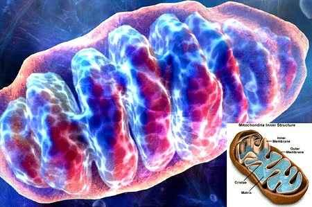 Антибиотик смог замедлить процесс старения