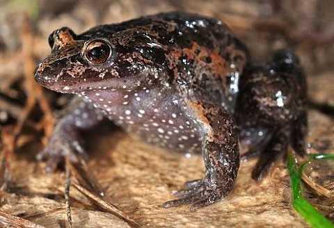 Ученые обнаружили в Израиле вымерший вид лягушек